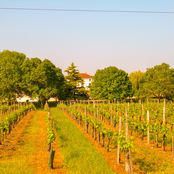 CHATEAU VITICOLE appellation AOC Blaye Côtes de Bordeaux, son corps de bâtiments en pierre, ses bâtiments d'exploitation et ses vignes.
